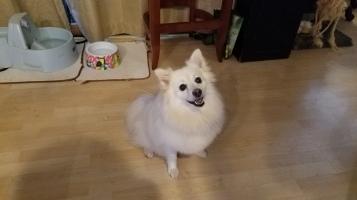 Bella!