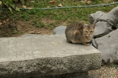 Kowloon Walled City Park - Cat